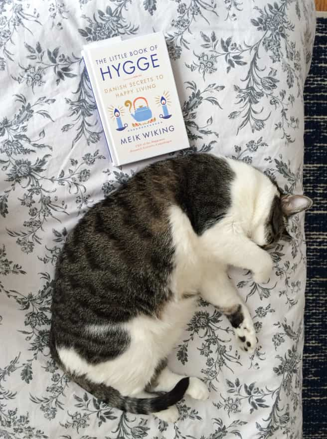 hygge-cat-1